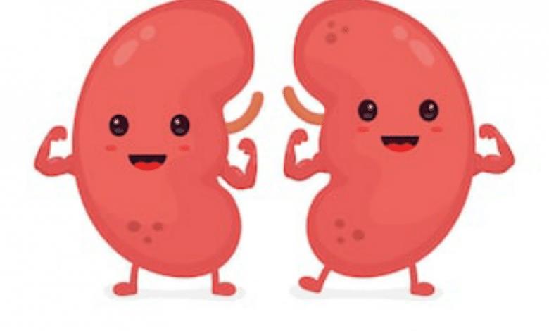 الكلى في جسم الانسان - العوامل التي يمكن بواسطتها المحافظة على صحة الكلى