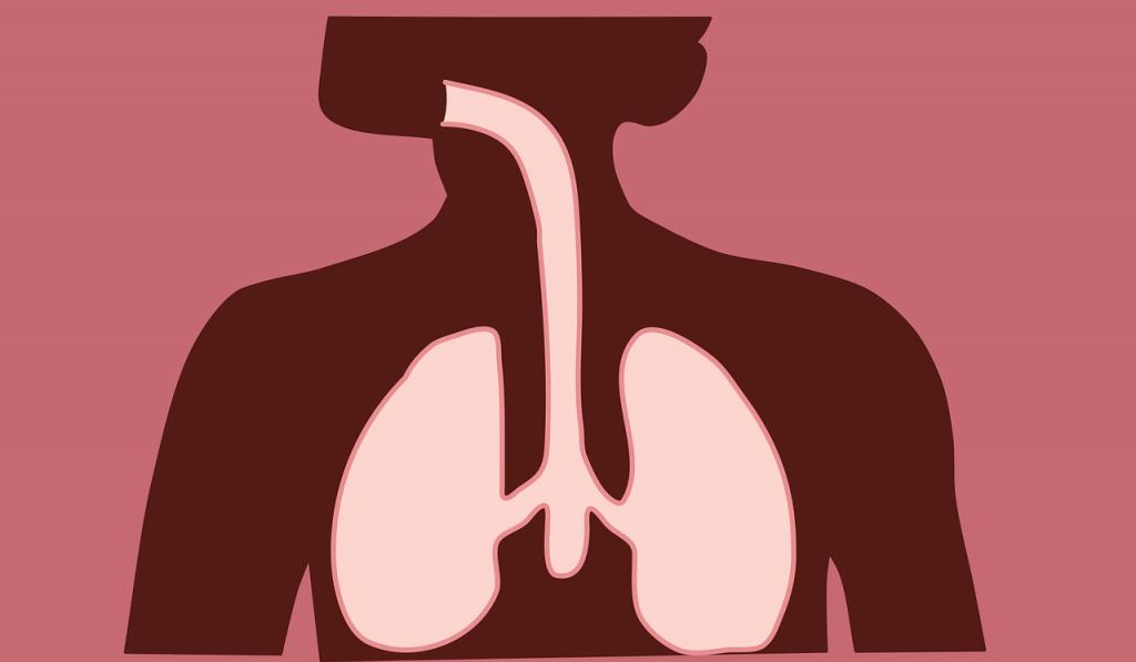 كيف نحافظ على الجهاز التنفسي الجهاز التنفسي فى الإنسان دكتور ماما