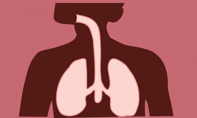 صورة كيف نحافظ على الجهاز التنفسي – الجهاز التنفسي فى الإنسان